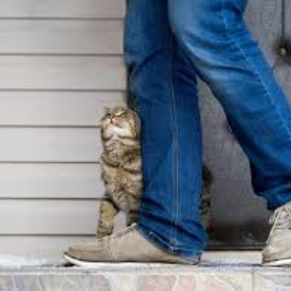 Por que os gatos se esfregam em objetos, pessoas e outros animais?
