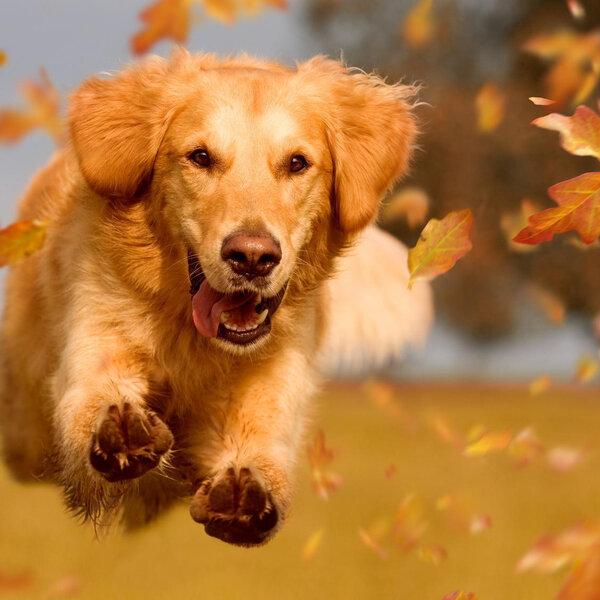 Basicamente, de quê um cachorro precisa para ser feliz?