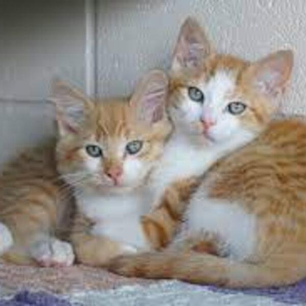 Tenho um casal de gatos de 2 anos, que são irmãos e foram adotados juntos, mas ambos têm dificuldades de se relacionar. Isso é normal?