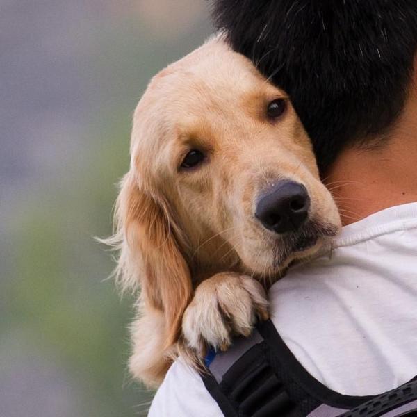 Neste período de quarentena, seu cachorro está ainda mais grudado em você? Fique atento às dicas!