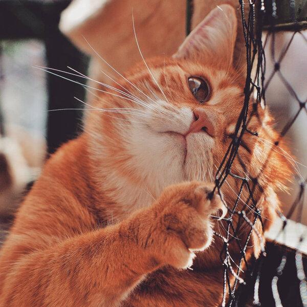Aprenda maneiras de manter seu gato ativo, mesmo dentro de casa