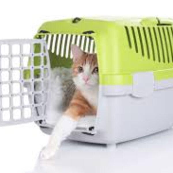 Clínica para gatos
