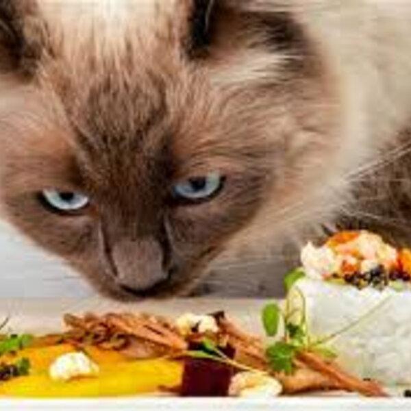 Ração ou alimentação natural?
