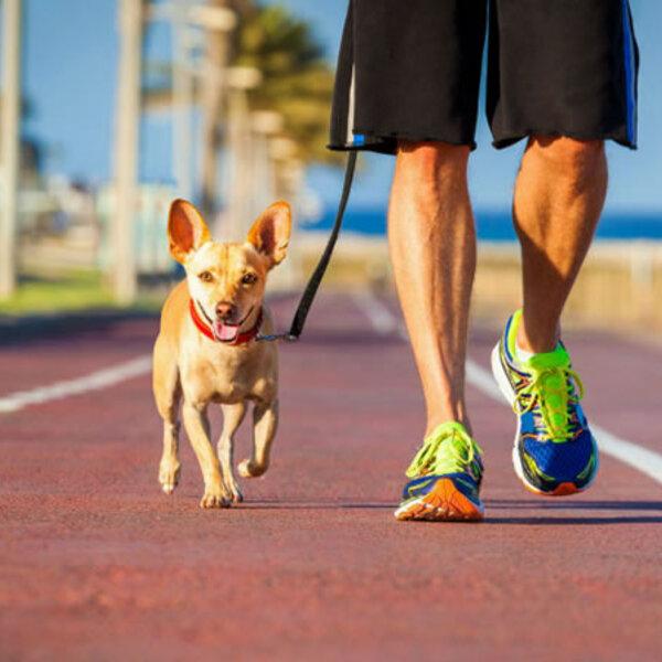 Existe uma fórmula certa de quanto um animal deva se exercitar?