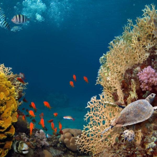 ODS - Vida debaixo d'água