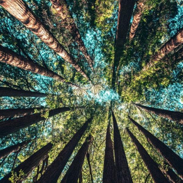 Desenvolvimento sustentável - Vidas terrestres