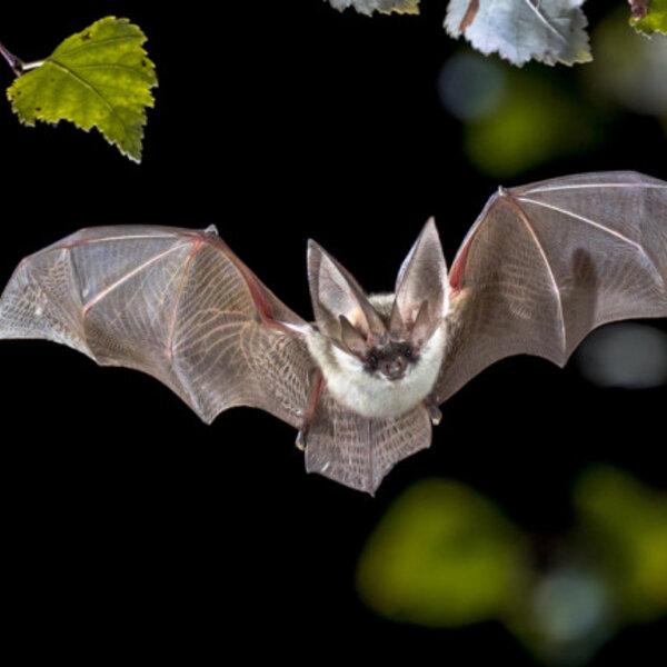 Morcegos (pt. 2)