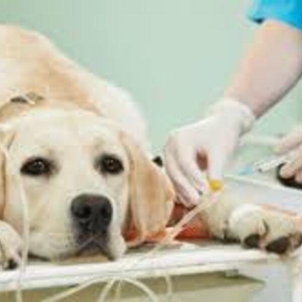 Diagnóstico de câncer para cães e gatos