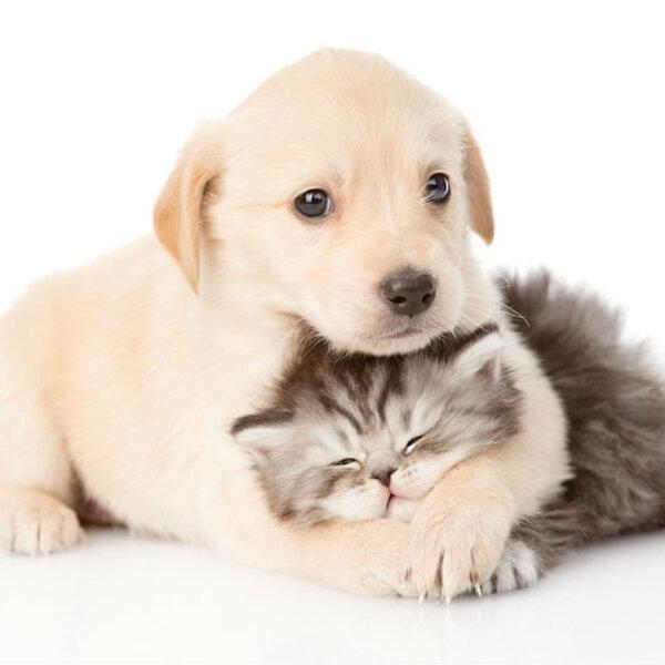 Planeje-se antes de ter um pet