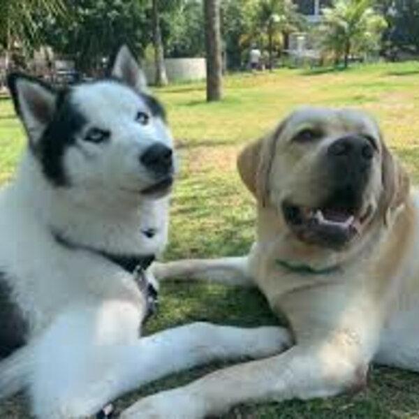 Parque de cães, o famoso