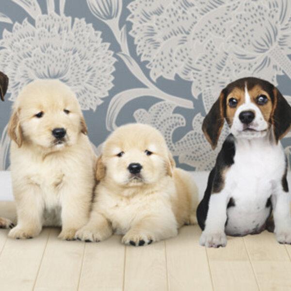 Qual seria a idade do seu cão ou gato se ele fosse gente?