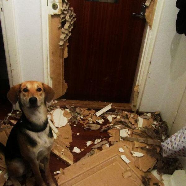 Seu cachorro não consegue ficar sozinho em casa? Fique atento!
