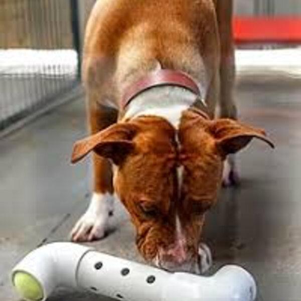Use brinquedos recheáveis e enriqueça a dieta alimentar do seu cão