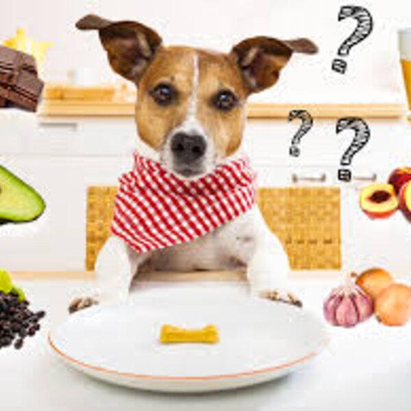 Seu pet teve uma intoxicação alimentar pós-festa?