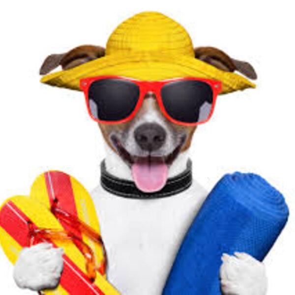 Viagem de férias: cuidados ao levar seu animal de estimação
