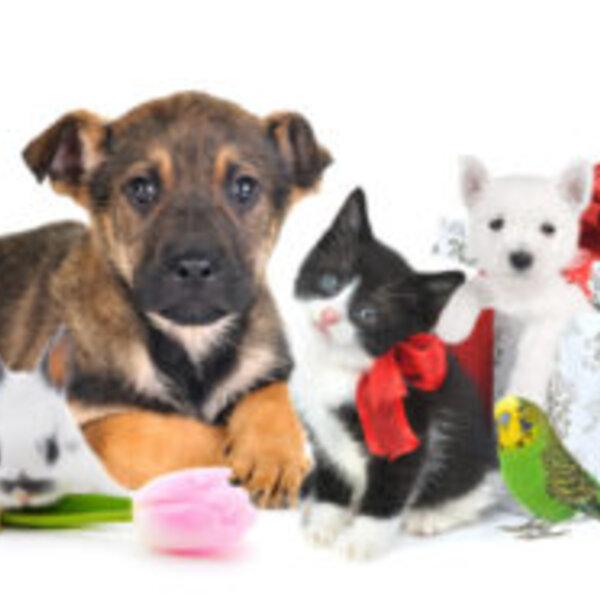 Para quem pensa em dar um animal como presente de Natal...