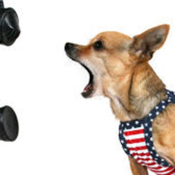 Entenda as razões dos latidos do seu cão