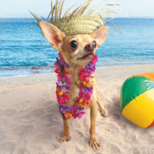 Recomendações indispensáveis para viajar com seu pet