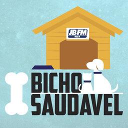 Bicho Saudável